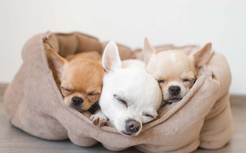 Best Bed for Dogs With Arthritis