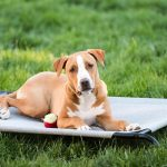 Best Cooling Bed for Dogs Reviews